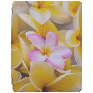 USA, Hawaii, Oahu, Plumeria flowers in bloom 1 iPad Cover