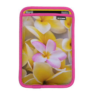 USA, Hawaii, Oahu, Plumeria flowers in bloom 1 iPad Mini Sleeve
