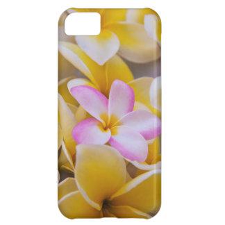 USA, Hawaii, Oahu, Plumeria flowers in bloom 1 iPhone 5C Case