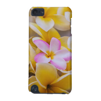 USA, Hawaii, Oahu, Plumeria flowers in bloom 1 iPod Touch (5th Generation) Cover