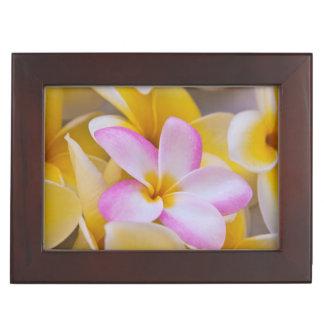 USA, Hawaii, Oahu, Plumeria flowers in bloom 1 Keepsake Box