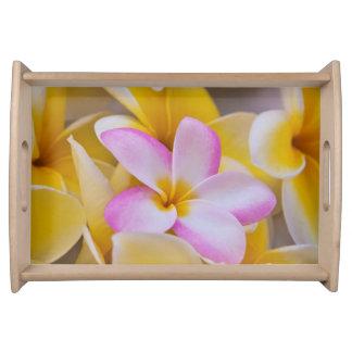 USA, Hawaii, Oahu, Plumeria flowers in bloom 1 Serving Tray