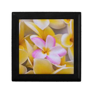 USA, Hawaii, Oahu, Plumeria flowers in bloom 1 Small Square Gift Box