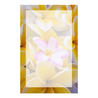 USA, Hawaii, Oahu, Plumeria flowers in bloom 1 Stationery