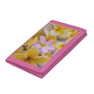 USA, Hawaii, Oahu, Plumeria flowers in bloom 1 Tri-fold Wallet