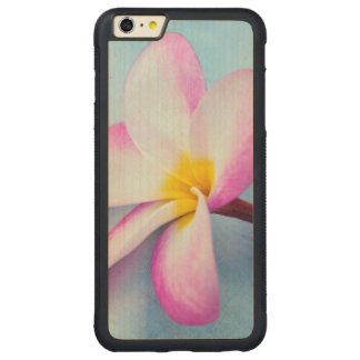 USA, Hawaii, Oahu, Plumeria flowers in bloom 2 Carved Maple iPhone 6 Plus Bumper Case