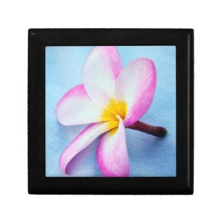 USA, Hawaii, Oahu, Plumeria flowers in bloom 2 Gift Box