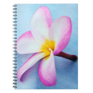 USA, Hawaii, Oahu, Plumeria flowers in bloom 2 Notebook