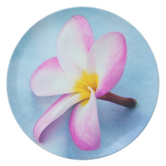 USA, Hawaii, Oahu, Plumeria flowers in bloom 2 Plate
