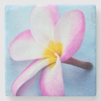 USA, Hawaii, Oahu, Plumeria flowers in bloom 2 Stone Coaster