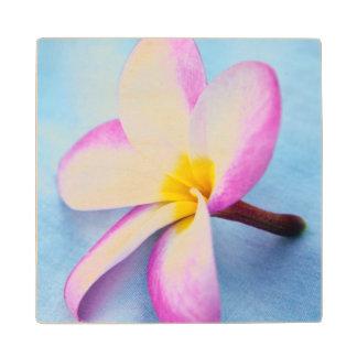 USA, Hawaii, Oahu, Plumeria flowers in bloom 2 Wood Coaster