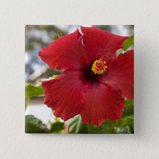USA, Hawaii, Oahu. The Hibiscus is the 15 Cm Square Badge