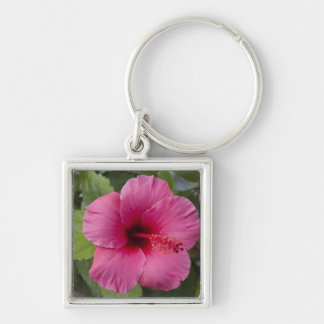 USA, Hawaii, Oahu. The Hibiscus is the 2 Silver-Colored Square Key Ring