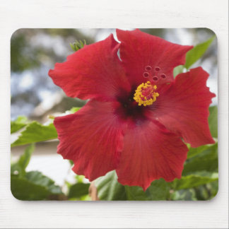 USA, Hawaii, Oahu. The Hibiscus is the Mouse Mat