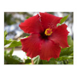 USA, Hawaii, Oahu. The Hibiscus is the Postcard