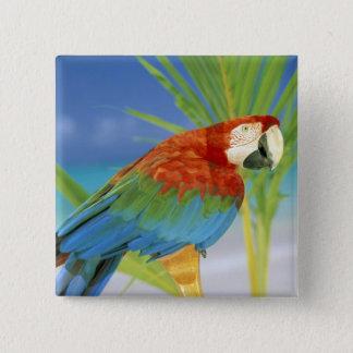 USA, Hawaii. Parrot 15 Cm Square Badge