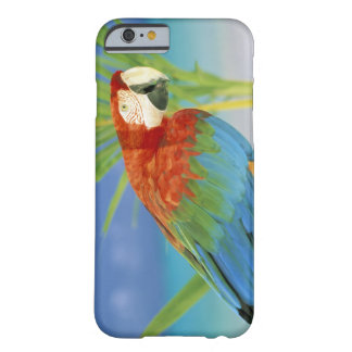 USA, Hawaii. Parrot Barely There iPhone 6 Case
