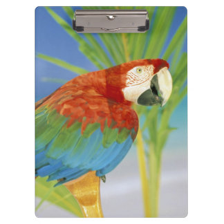 USA, Hawaii. Parrot Clipboard