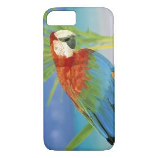 USA, Hawaii. Parrot iPhone 8/7 Case