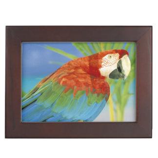 USA, Hawaii. Parrot Keepsake Box