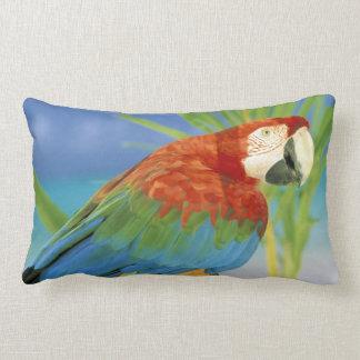USA, Hawaii. Parrot Lumbar Cushion