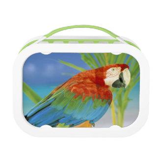 USA, Hawaii. Parrot Lunchbox