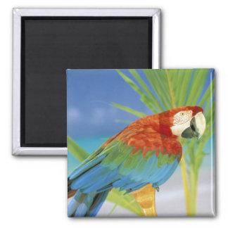 USA, Hawaii. Parrot Magnet