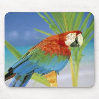 USA, Hawaii. Parrot Mouse Mat