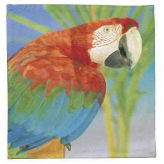 USA, Hawaii. Parrot Napkin