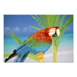 USA, Hawaii. Parrot Photo Print