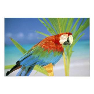 USA, Hawaii. Parrot Photograph
