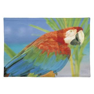 USA, Hawaii. Parrot Placemat
