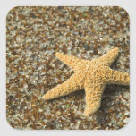 USA, HI, Kauai, Glass Beach with Star fish