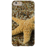 USA, HI, Kauai, Glass Beach with Star fish Barely There iPhone 6 Plus Case