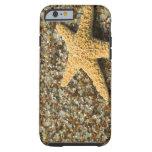 USA, HI, Kauai, Glass Beach with Star fish Tough iPhone 6 Case
