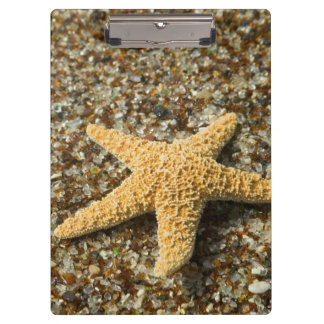 USA, HI, Kauai, Glass Beach with Star fish Clipboard
