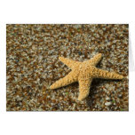 USA, HI, Kauai, Glass Beach with Star fish Greeting Card