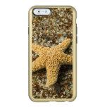 USA, HI, Kauai, Glass Beach with Star fish Incipio Feather® Shine iPhone 6 Case