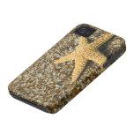 USA, HI, Kauai, Glass Beach with Star fish iPhone 4 Cover