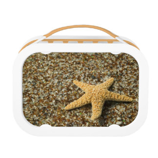 USA, HI, Kauai, Glass Beach with Star fish Lunchbox