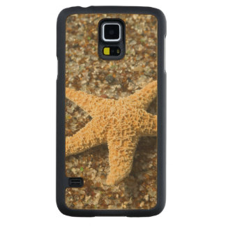 USA, HI, Kauai, Glass Beach with Star fish Maple Galaxy S5 Case