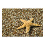USA, HI, Kauai, Glass Beach with Star fish Photo Art