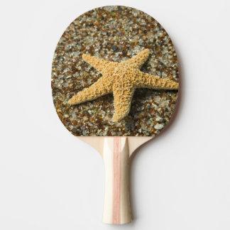 USA, HI, Kauai, Glass Beach with Star fish Ping Pong Paddle
