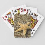 USA, HI, Kauai, Glass Beach with Star fish Playing Cards