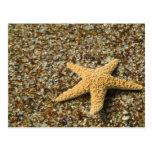 USA, HI, Kauai, Glass Beach with Star fish Postcard