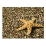 USA, HI, Kauai, Glass Beach with Star fish Postcard