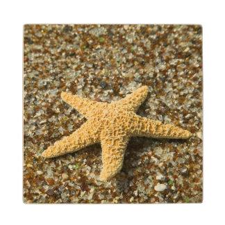 USA, HI, Kauai, Glass Beach with Star fish Wood Coaster