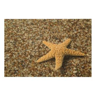 USA, HI, Kauai, Glass Beach with Star fish Wood Wall Decor
