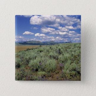 USA, Idaho, Camas Co. Sagebrush and lupine 15 Cm Square Badge