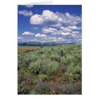 USA, Idaho, Camas Co. Sagebrush and lupine Card